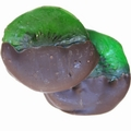 Dark Chocolate Dipped Kiwi