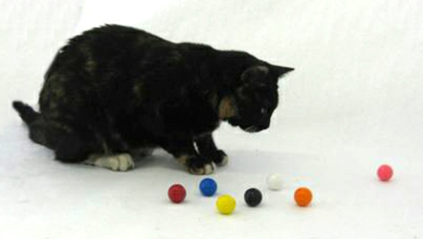 Gumballs So Delicious, Even the Cats Love 'Em