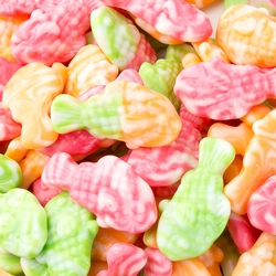 Tropical Fish Gummies - 2LB Bag