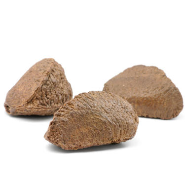 Brazil Nuts In Shell
