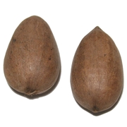 Pecans in Shell