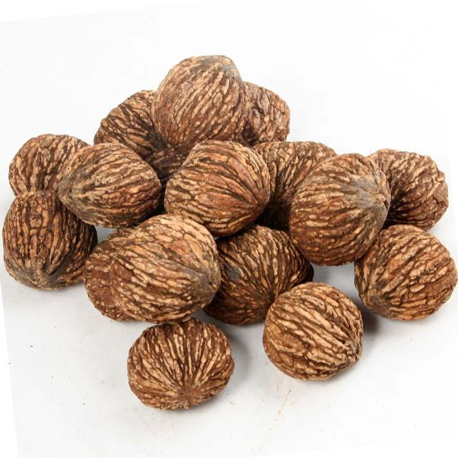 how to grow english walnuts from seed