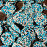 Chocolate Blue & White Nonpareils - Bulk