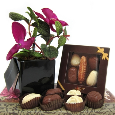 Milk Chocolate Planter Combo