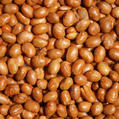 Roasted Unsalted Soy Nuts