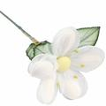 White Jordan Almond Flower with Stem